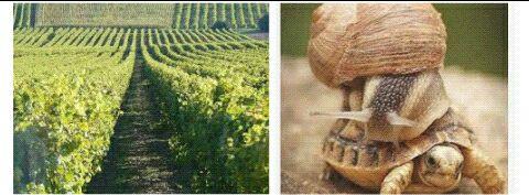 Vente directe, producteur, vigne, vigneron, pineau des Charentes, liqueur, creme, chocolat, conserves, biere, biere locale, bio, biere bio, cognac bio, brands, beunaise, Charente locale